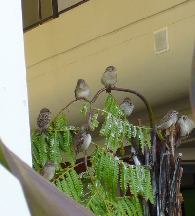 Hotel_birds_2